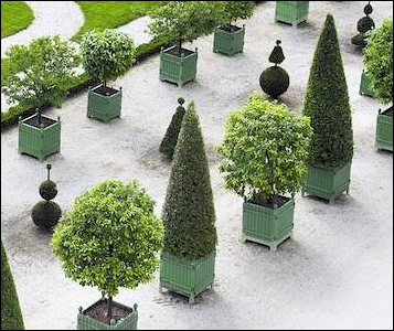 Topiaries in the Versailles Gardens (Courtesy Gardenista)