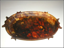 Shell of the Hawksbill Sea Turtle (Courtesy Wikipedia)