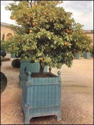 Orangeries, Versailles Gardens (wiki)